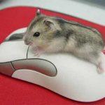 События мыши: клики, кнопка, координаты