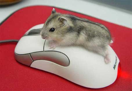 события мыши: клики, координаты